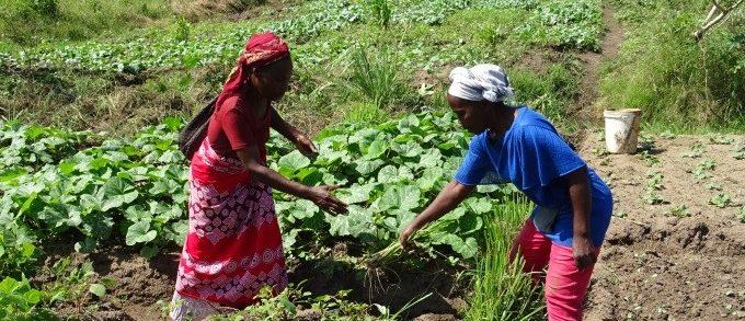 Un nouvel outil pour mesurer la conversion des producteurs à l'agroécologie.